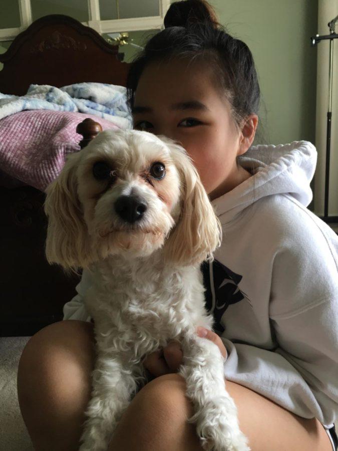 PetSmart Holds Adoption Event