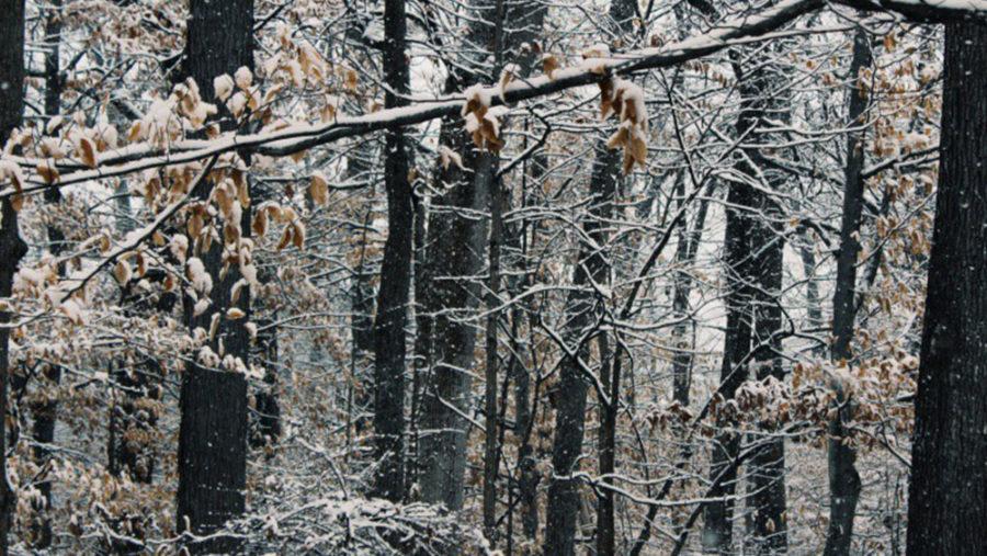 LCPS Winter Break Shortened to 12 Days